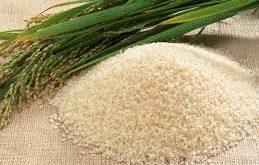 عمده فروشی برنج تازه شمال
