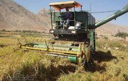 برنج پرمحصول کشور