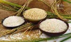 خریدار برنج اصل شمال
