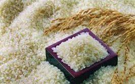 خرید عمده برنج