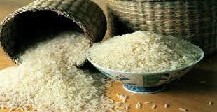 برنج شکسته شمال محلی
