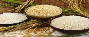 پخش برنج شکسته شمال