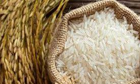 تهیه برنج شیرودی