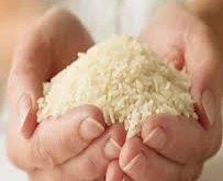 تهیه برنج کشت دوم