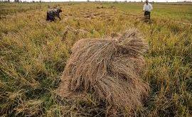 بورس برنج شمال