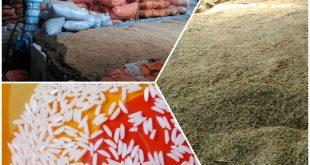 قیمت برنج طارم
