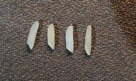 شناسایی برنج بومی