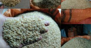 قیمت خرید برنج