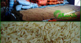 برنج فریدونکنار