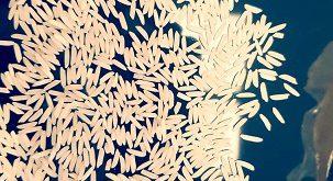 برنج طارم هاشمی رتون