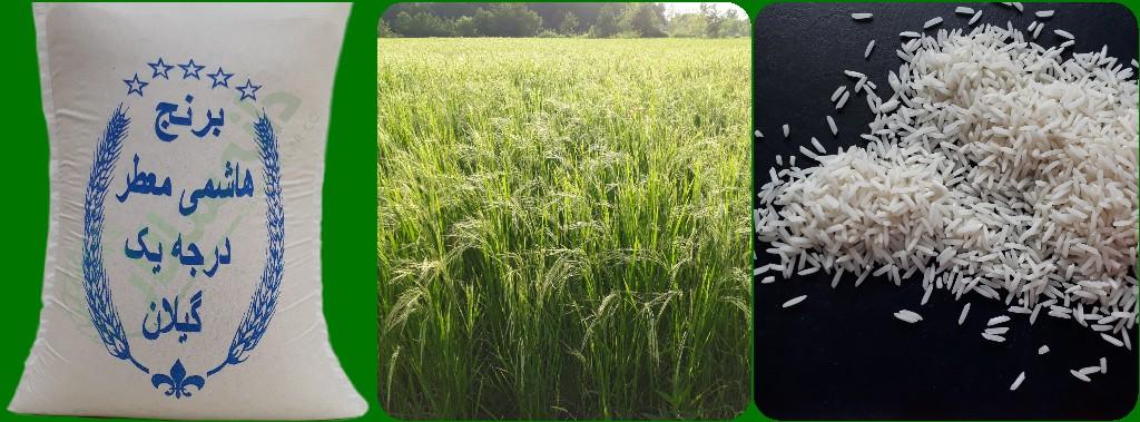 قیمت انواع برنج مرغوب ایرانی