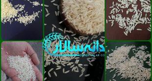 انواع برنج محلی گیلان